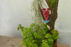 キャットテール・エアープランツ流木寄せ植え