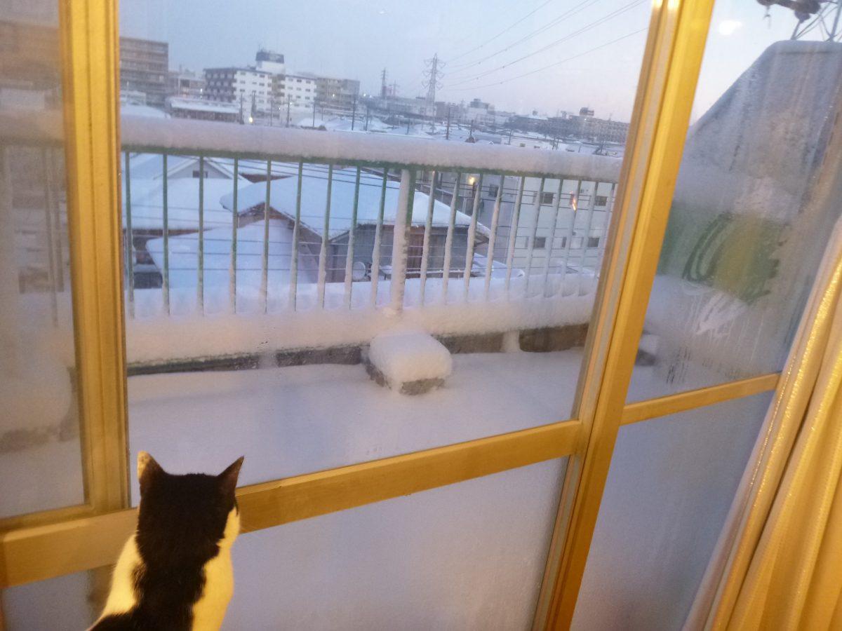 関東旅2018.4 雪