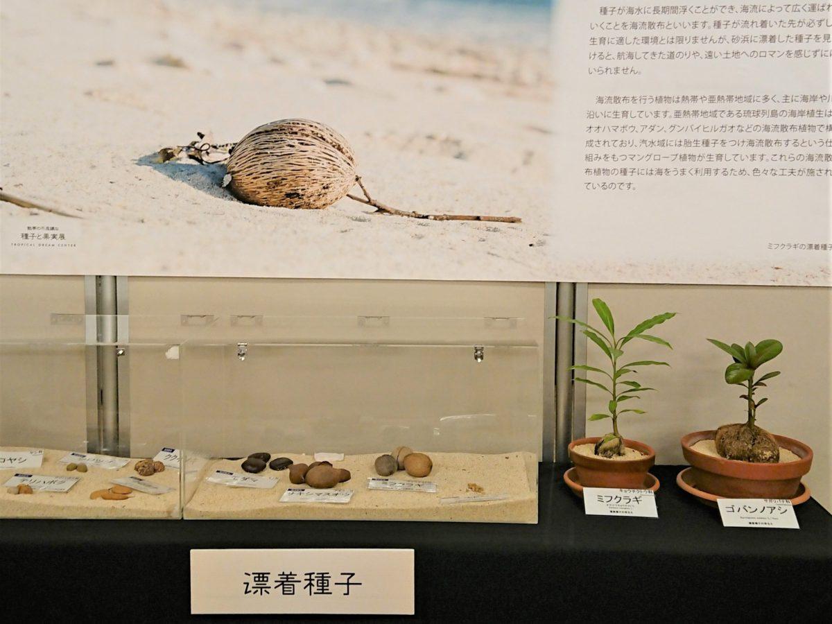 旅する種展示中