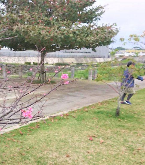 お散歩倶楽部
